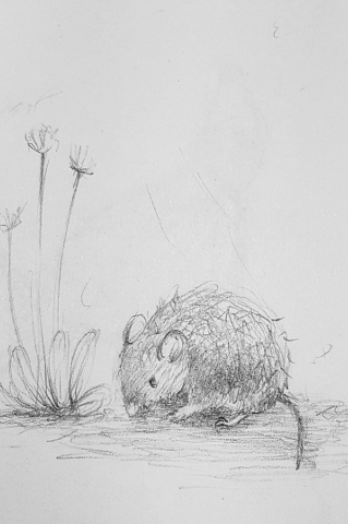A Mouse sketch image