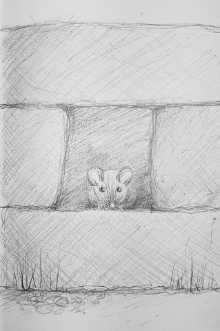 A Second Mouse sketch image
