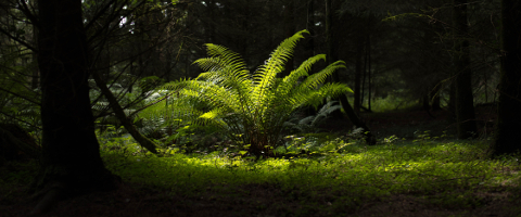 Fern II photo