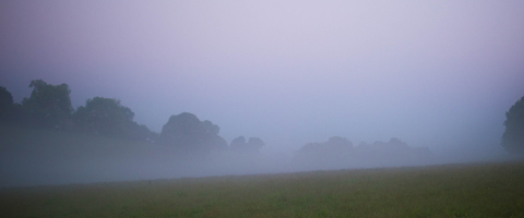 Early Monring Mist photo