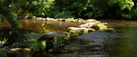 Stepping Stones photo