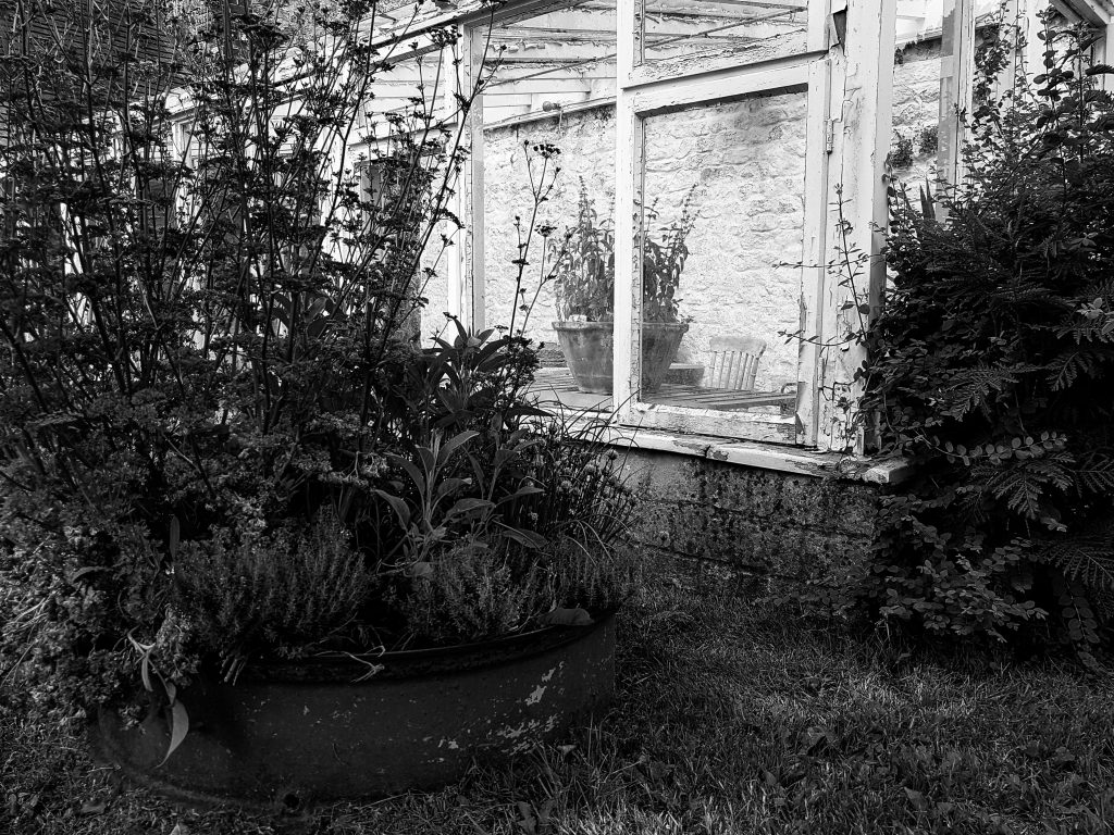 Greenhouse B+W image