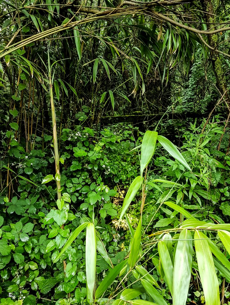 Jungle I image