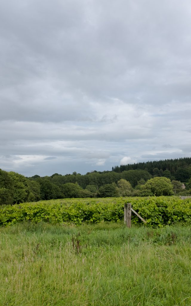 British Vineyard image