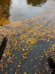 Canal Leaves image