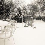 Snow Garden - Garden in Snow image