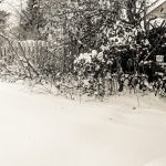 Snow Garden - Hedge in Snow image