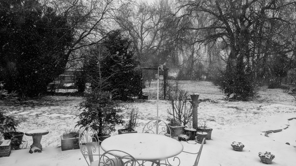 Snow Garden image