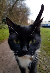 Towpath Cat image