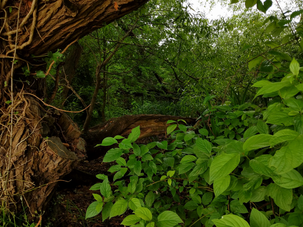 The Long Journey Home - Part 14 - Onto The Thames - Nearly - Undergrowth image